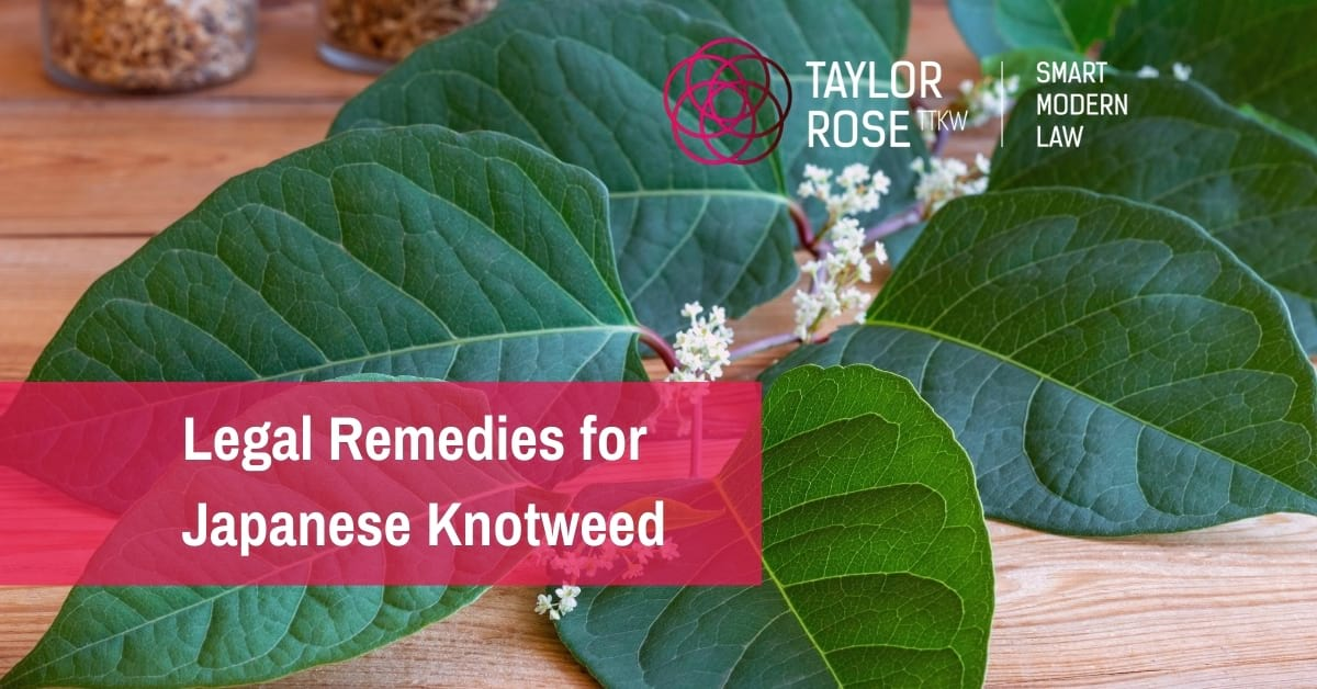 What is the Law on Japanese Knotweed and Bamboo?